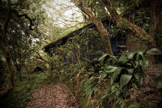 Tropic rain forest