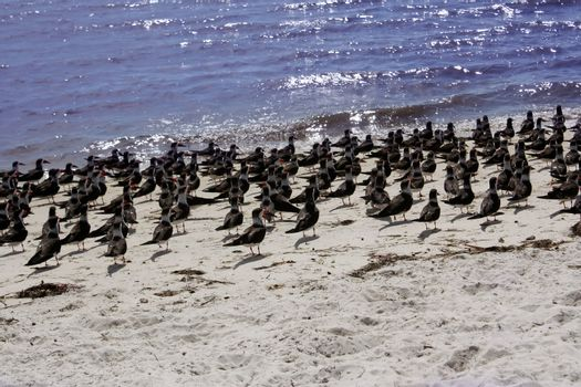 birds on gulf coast