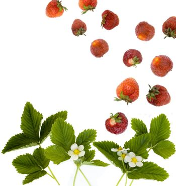 strawberry fruits and leaves