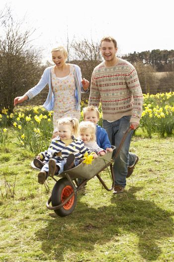 Father Giving Children Ride In Wheelbarrow Through Field Of Spring Daffodils