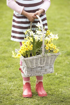 Detail Of Girl Holding Basket Of Daffodils In Garden