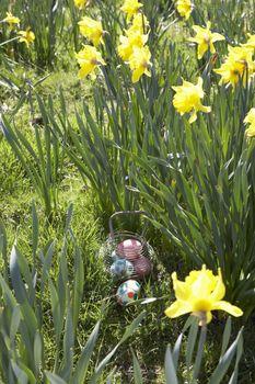Easter Eggs Hidden For Hunt In Daffodil Field