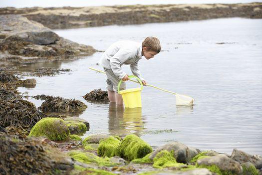 Boy on beach collecting shells