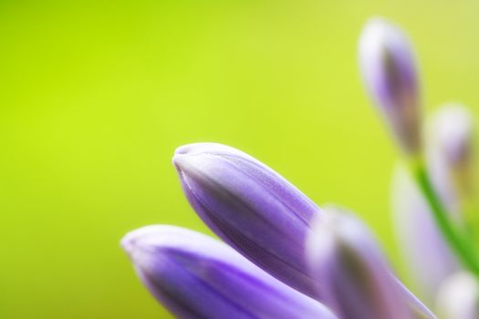 Colorful flower macro with shallow DOF