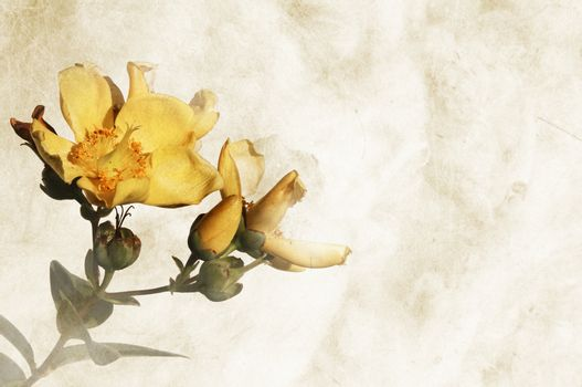 Textured background with flowers and space for text or image - scrapbooking
