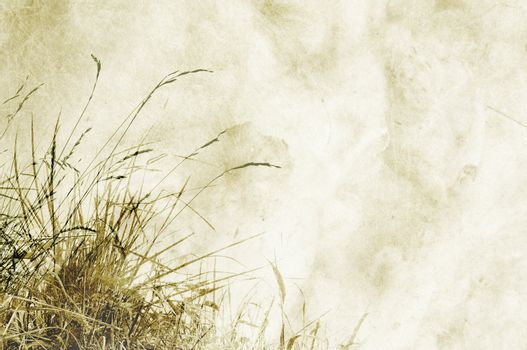 Textured background with herbs and space for text or image - scrapbooking