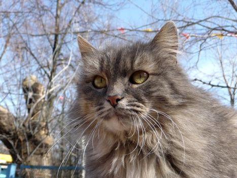 Fuzzy gray cat on a background of blue sky