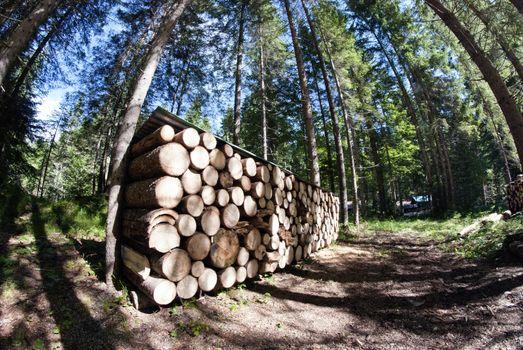 Lumber, Dolomites