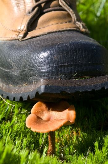 The boot and the Mushroom