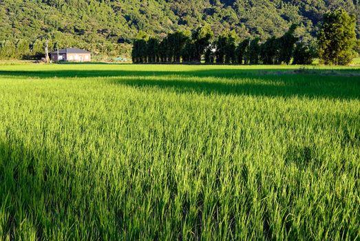 Idyllic scenery in country