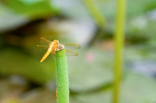 Dragonfly on stalk