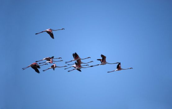 Bunch of flamingos flying over a blue sky