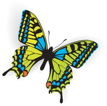 Butterfly Vector Illustration with shadow on white background
