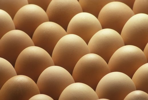 Country brown eggs lined up