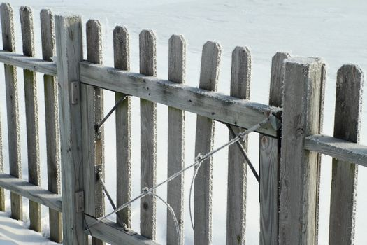 Frost covered Fence