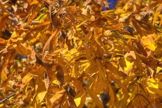 Orange Leaves in Trees