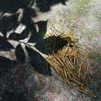 Dry pine needles and shade of live leaves on a granite boulder background