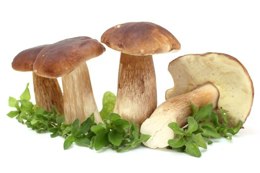fresh white mushrooms (Boletus edulis)
