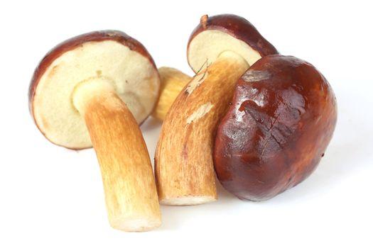mushroom (Xerocomus badius, Boletus badius) isolated on white background