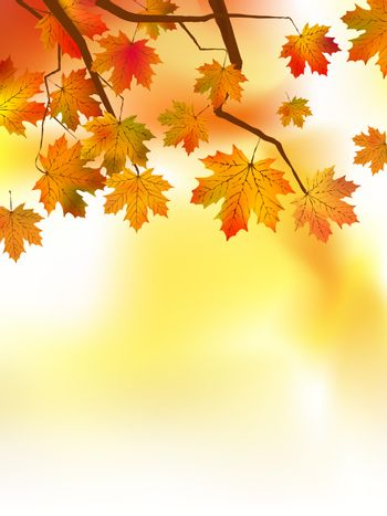 Autumnal leaf of maple and sunlight. EPS 8 vector file included