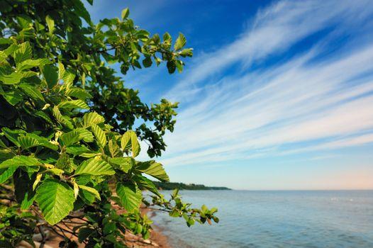 Coastal bushes