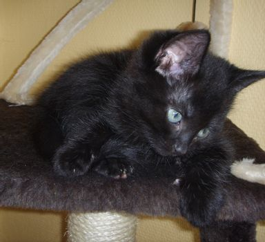 Cute kitten looking down.