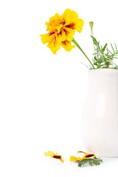 marigold flowers in vase