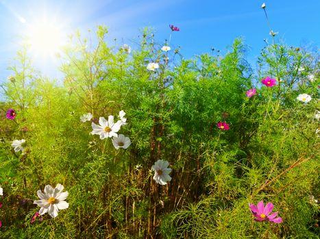Summer flowers against blue sky and sun
