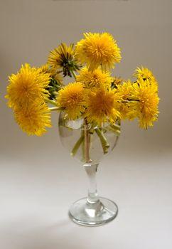 A bouquet of dandelion in the glass, sun illuminated.