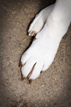 White Dog Paws