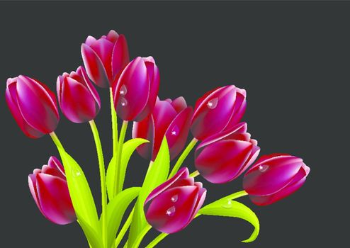 Bunch of red tulips isolated on black background