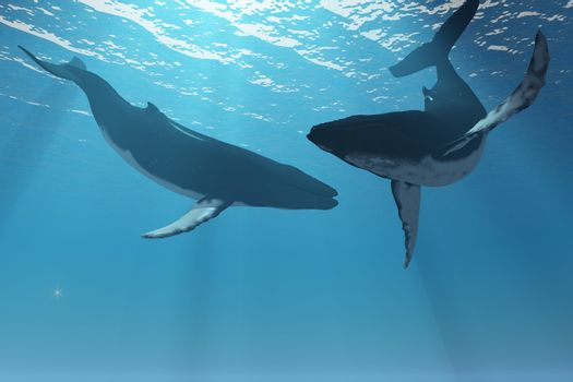 Two Humpback whales frolic in the rays of light from the sun.