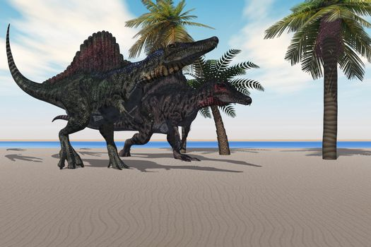 Two Spinosaurus dinosaurs amble down a beach looking for food.