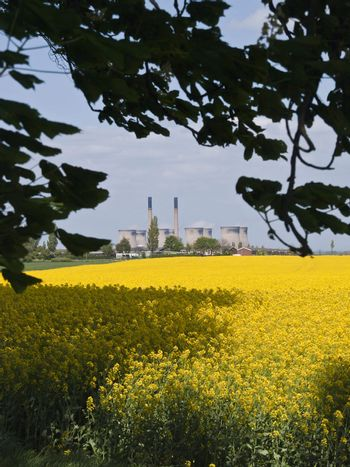Beauty and the Beast Rapeseed and Power Station Chimnies