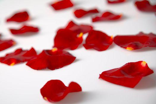 Sparsed rose petals