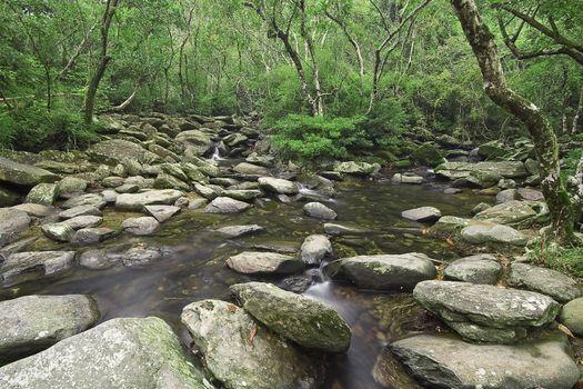 cascade of water through forest