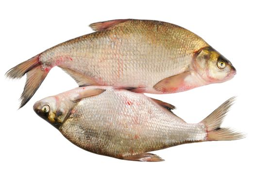 Two fresh freshwater fish. Bream. Isolated on white.