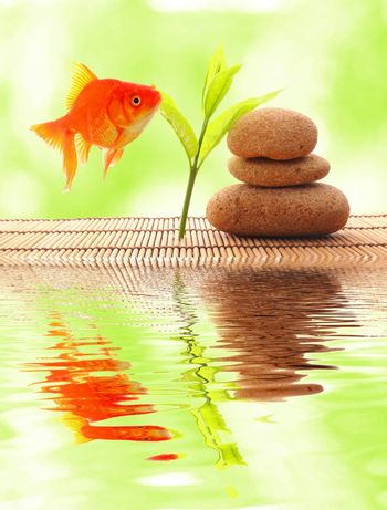 zen or spa concept with stones goldfish and water reflection