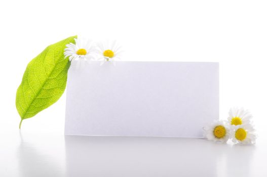 empty sheet of paper and green leaf for note