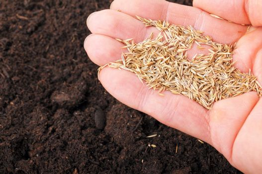 sowing hand and soil showing growth or agriculture concept