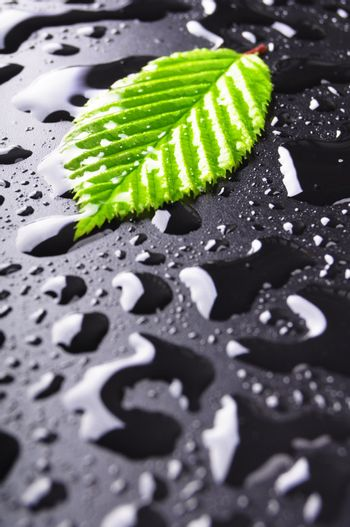 leaf and black background with rain water drops and copyspace