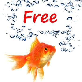 word free and goldfish showing sale or discount concept