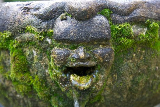 smiling face of moss statue