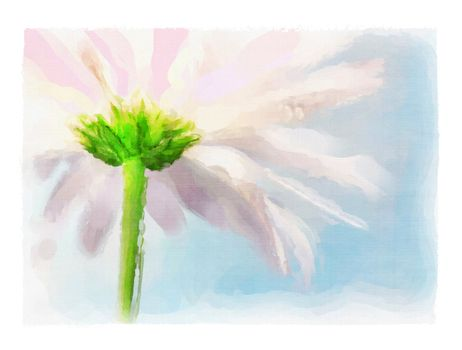 Digital watercolor of pink daisy
