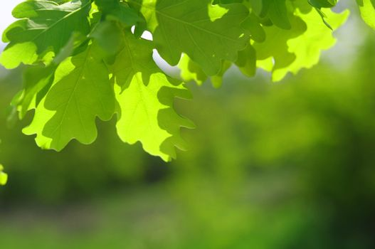beautyful nature scene with leaves and copyspace in summer