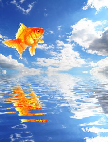 blue sky goldfish with water reflection clouds and copyspace