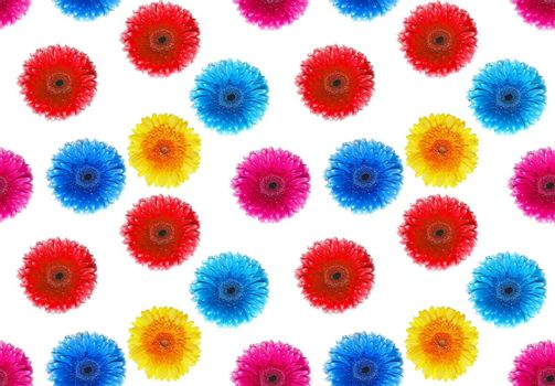 flowers gerbers on a white background. A seamless background.