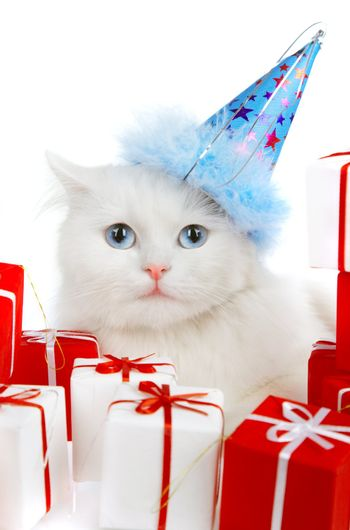 White cat with gifts