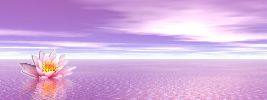 Pink lily flower in the violet ocean
