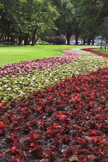 A lawn with grass and strips of flowers in a summer park.